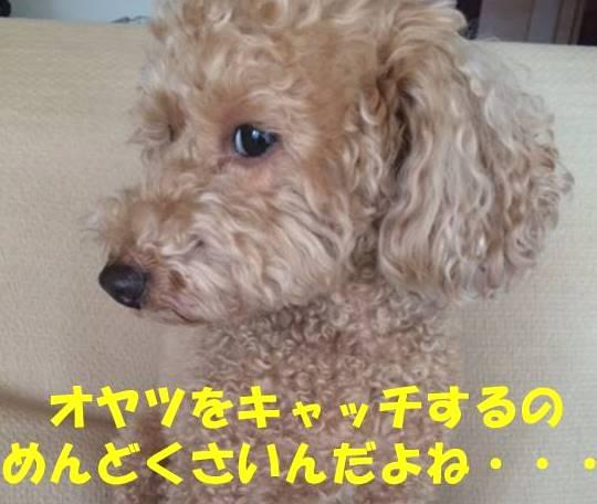 f:id:nanachan59:20180611211627j:plain
