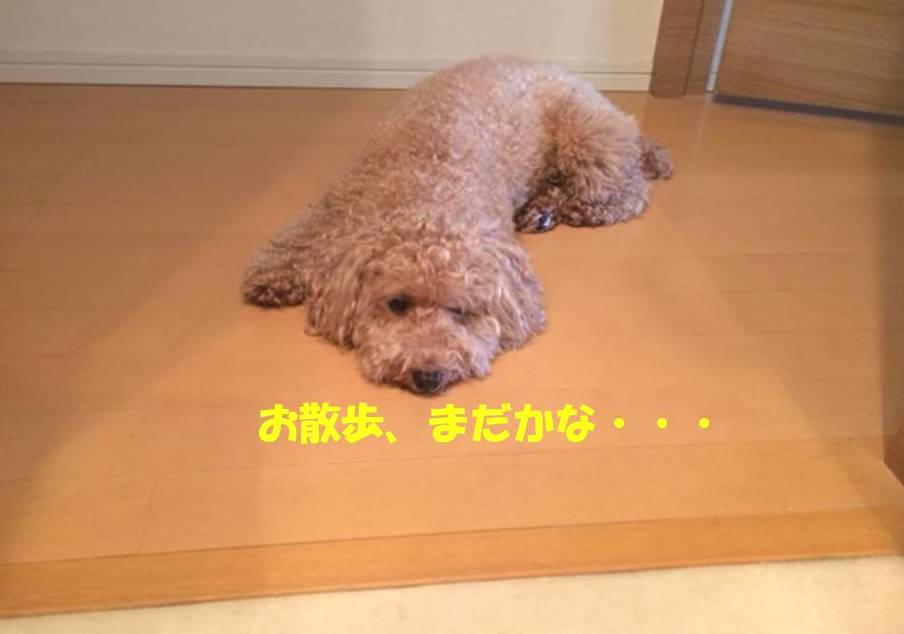 f:id:nanachan59:20180615173957j:plain