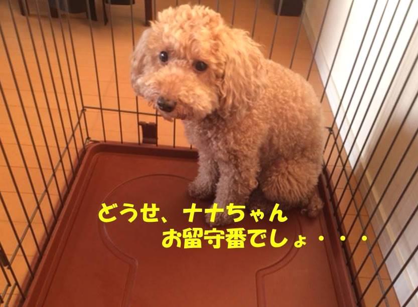 f:id:nanachan59:20180615174416j:plain