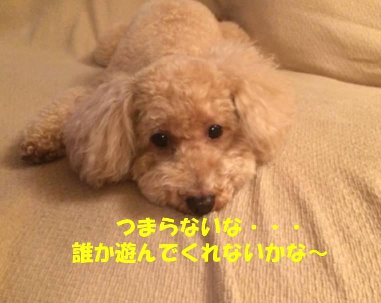f:id:nanachan59:20180615175014j:plain