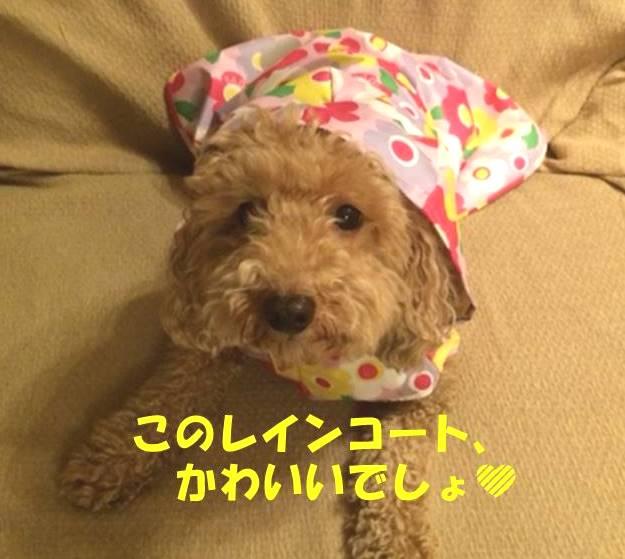 f:id:nanachan59:20180618183557j:plain