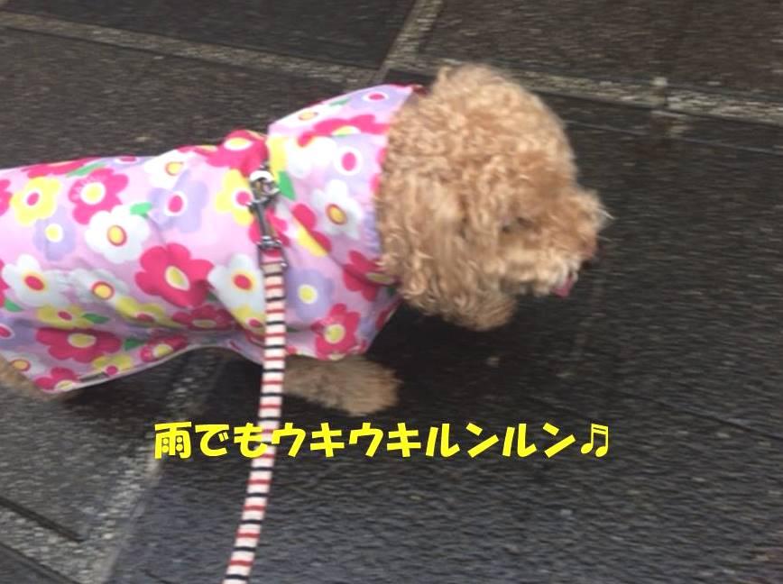 f:id:nanachan59:20180618184004j:plain