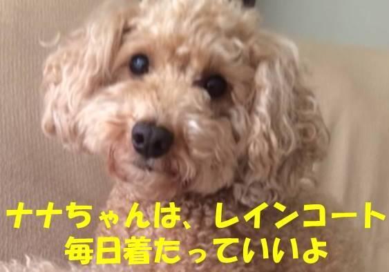 f:id:nanachan59:20180618202450j:plain