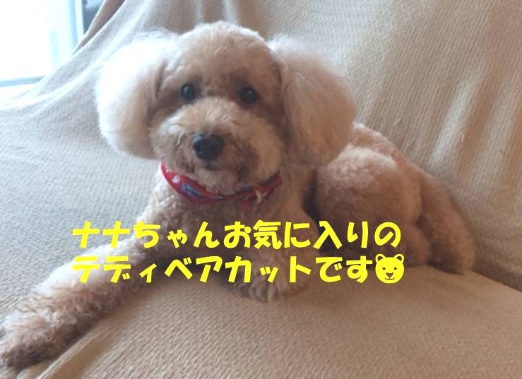 f:id:nanachan59:20180621173426j:plain
