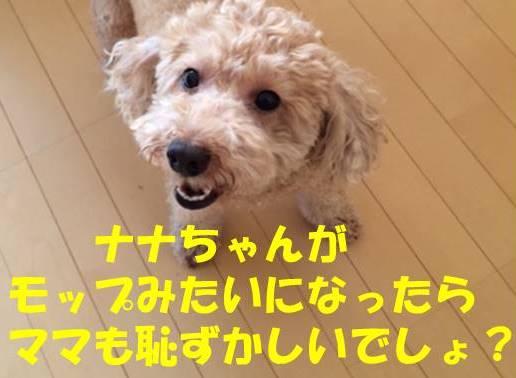 f:id:nanachan59:20180621174446j:plain