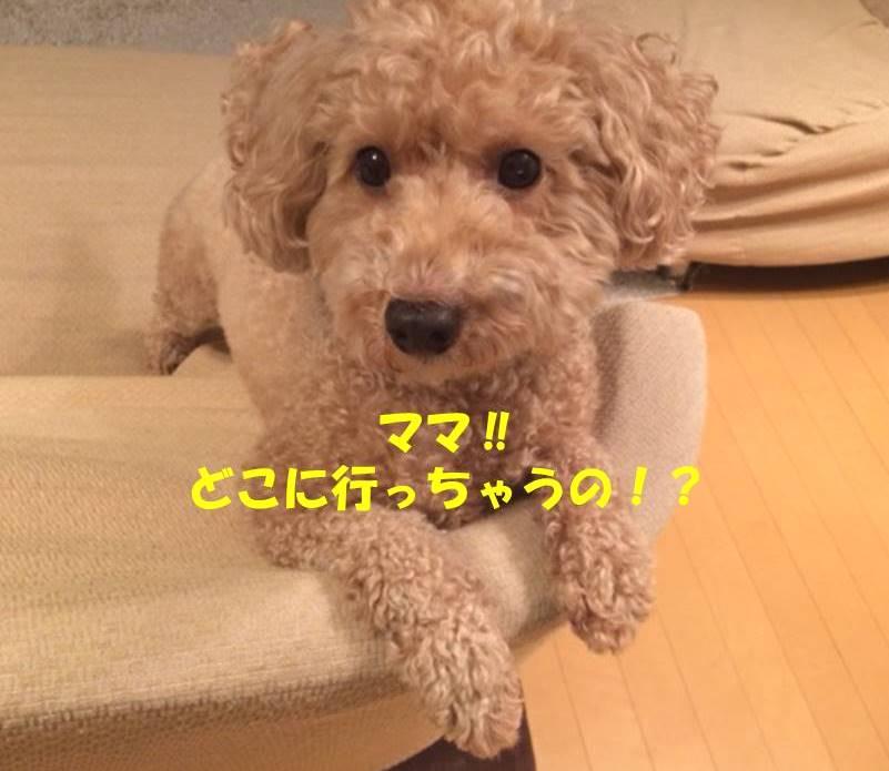 f:id:nanachan59:20180701205425j:plain