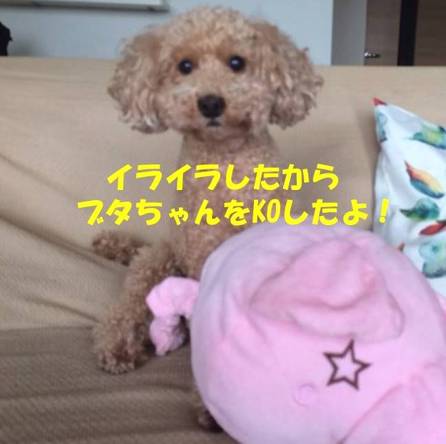 f:id:nanachan59:20180707185703j:plain