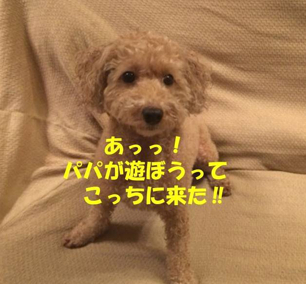 f:id:nanachan59:20180708133521j:plain