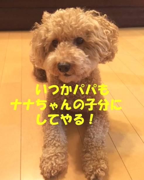 f:id:nanachan59:20180708134207j:plain