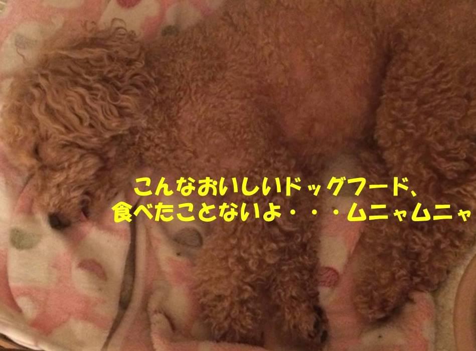 f:id:nanachan59:20180711175818j:plain
