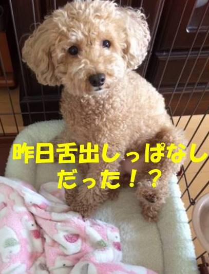 f:id:nanachan59:20180711180425j:plain