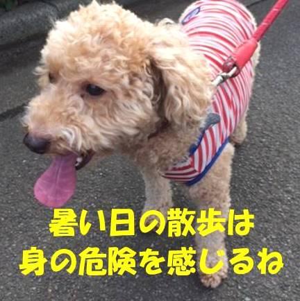 f:id:nanachan59:20180714160716j:plain