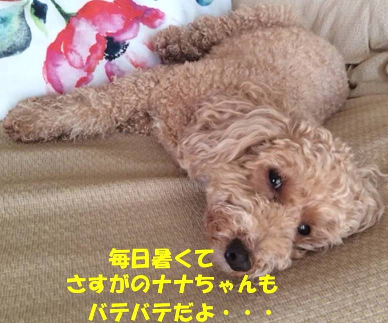 f:id:nanachan59:20180714161706j:plain