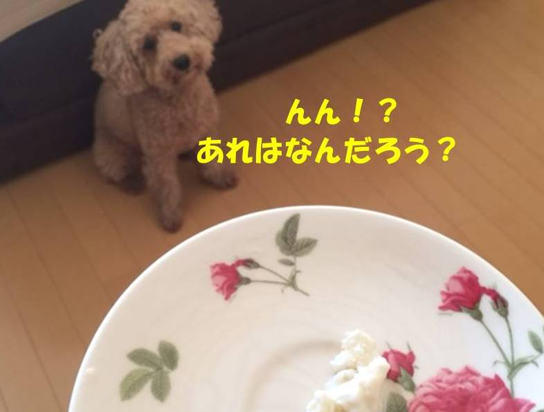 f:id:nanachan59:20180717160346j:plain