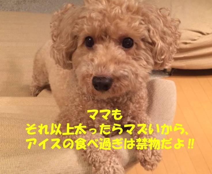f:id:nanachan59:20180717211923j:plain