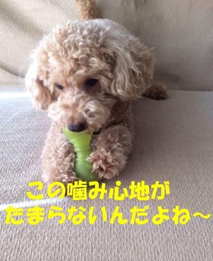 f:id:nanachan59:20180721203749j:plain