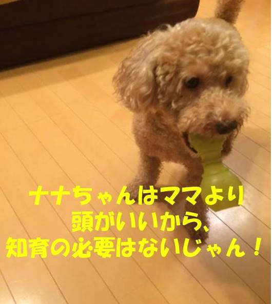f:id:nanachan59:20180721235724j:plain