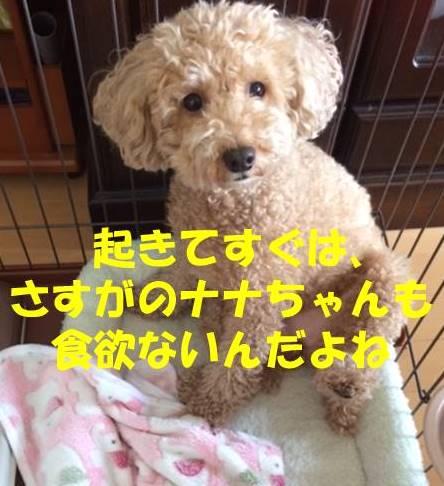 f:id:nanachan59:20180723180117j:plain