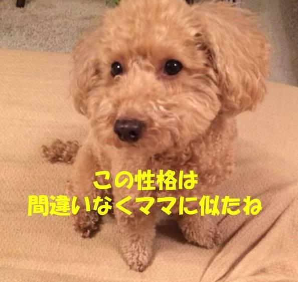 f:id:nanachan59:20180723182559j:plain