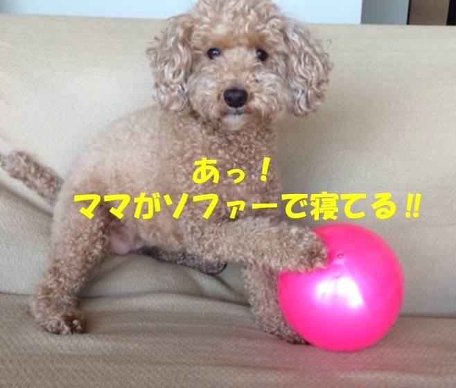 f:id:nanachan59:20180728175932j:plain