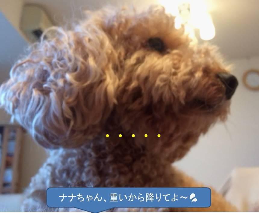 f:id:nanachan59:20180728180504j:plain