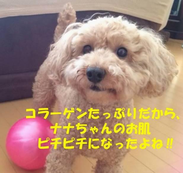 f:id:nanachan59:20180730212613j:plain