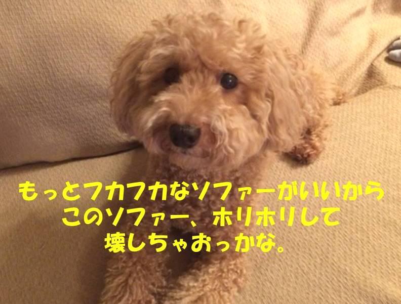 f:id:nanachan59:20180804221429j:plain