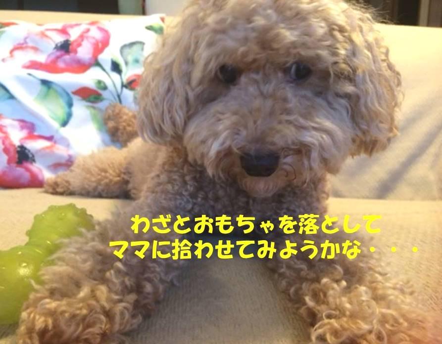 f:id:nanachan59:20180808183457j:plain