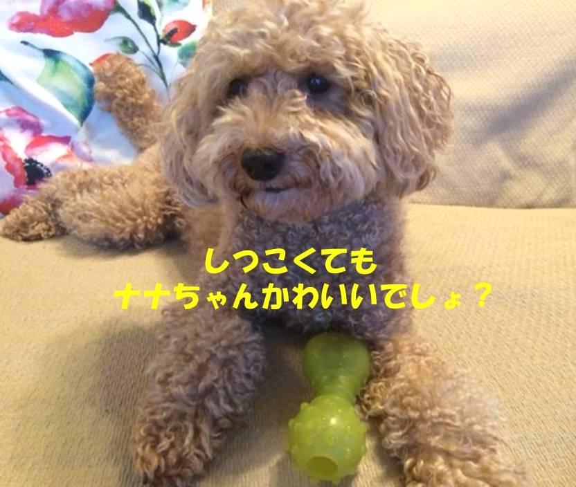 f:id:nanachan59:20180808184318j:plain