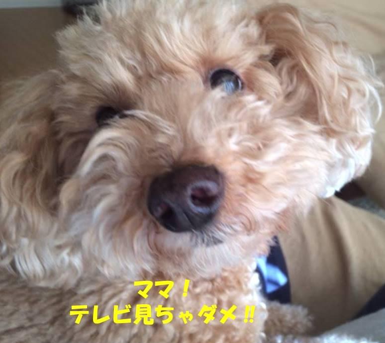 f:id:nanachan59:20180810155638j:plain