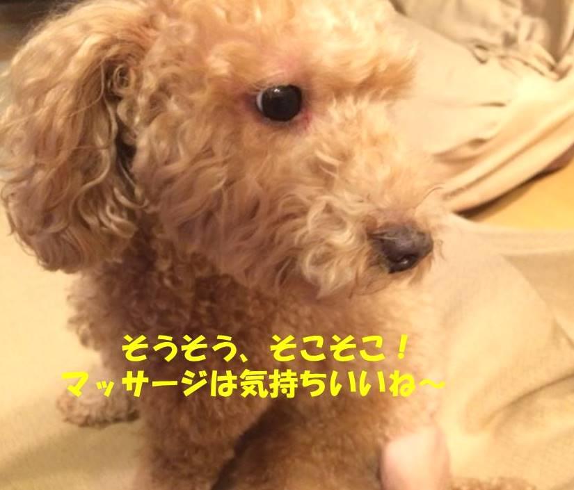f:id:nanachan59:20180810160525j:plain