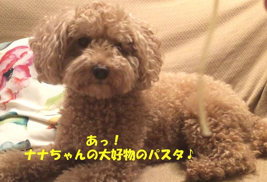 f:id:nanachan59:20180815210555j:plain