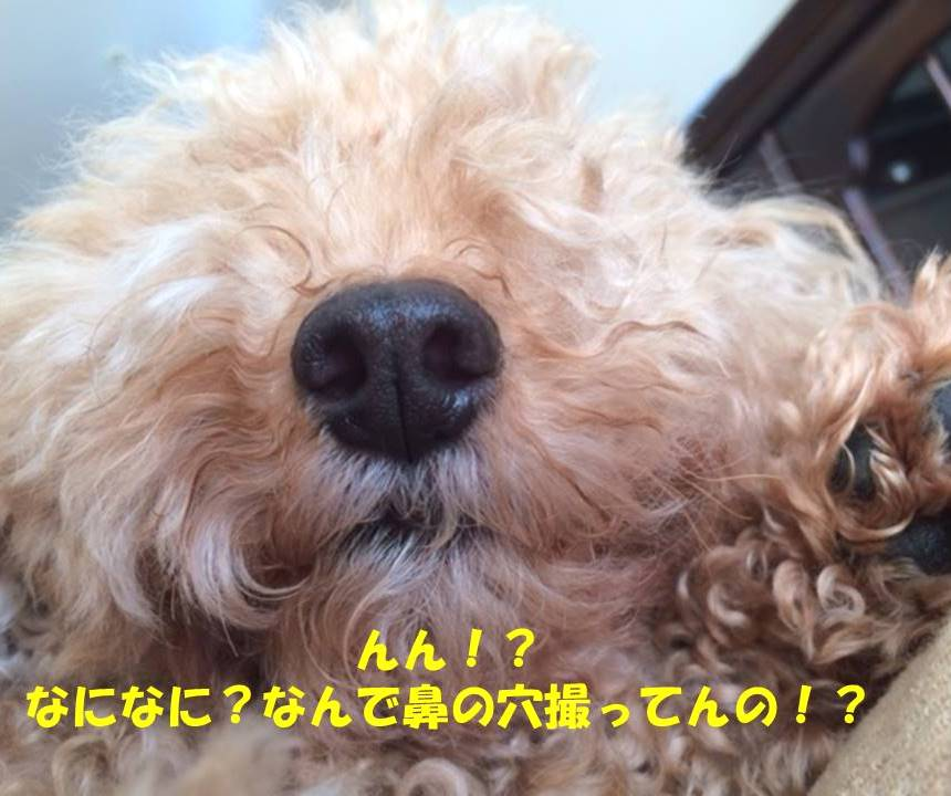 f:id:nanachan59:20180818182344j:plain