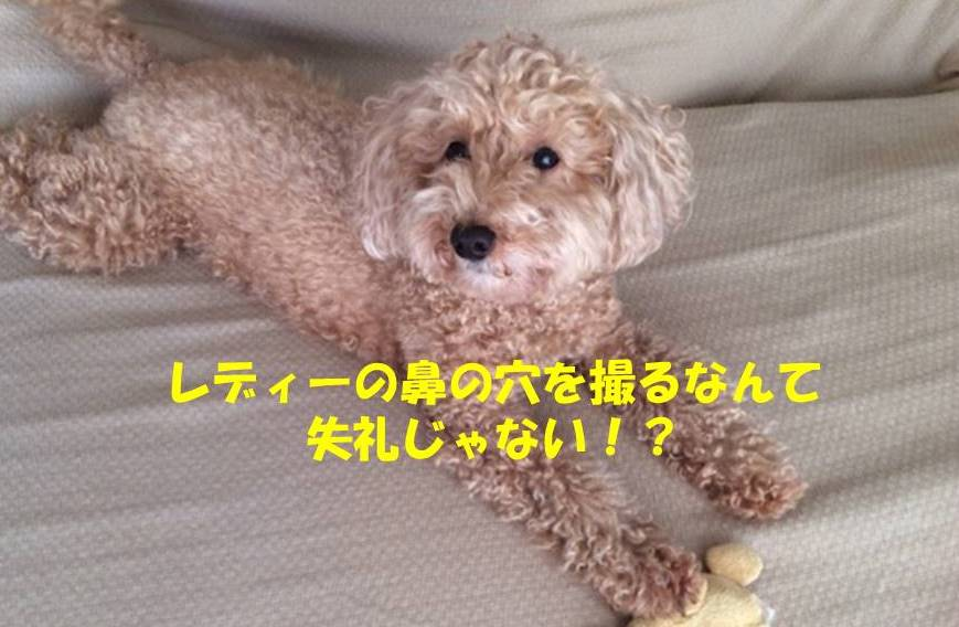 f:id:nanachan59:20180818182734j:plain