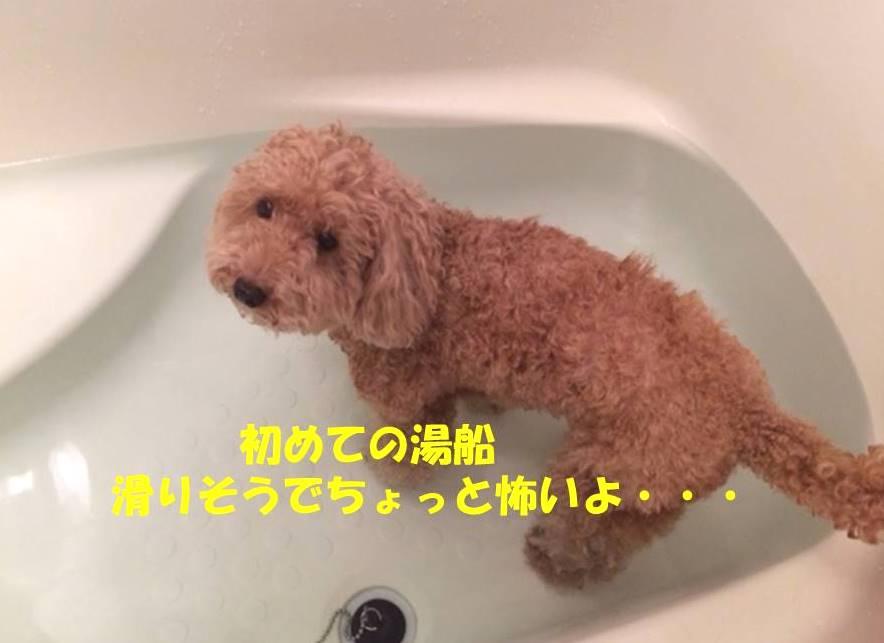 f:id:nanachan59:20180819235942j:plain