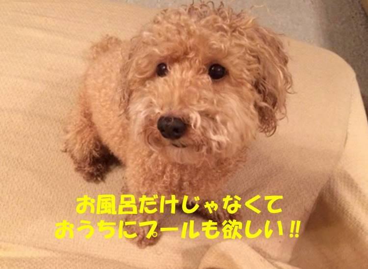 f:id:nanachan59:20180820000750j:plain