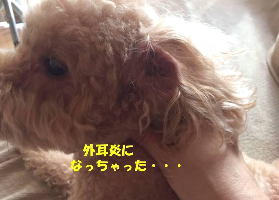 f:id:nanachan59:20180825161421j:plain
