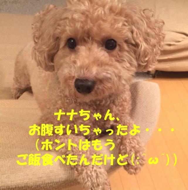 f:id:nanachan59:20180828165056j:plain