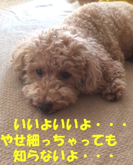 f:id:nanachan59:20180828170545j:plain