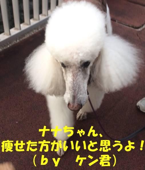 f:id:nanachan59:20180828171034j:plain