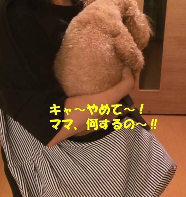 f:id:nanachan59:20180831165428j:plain