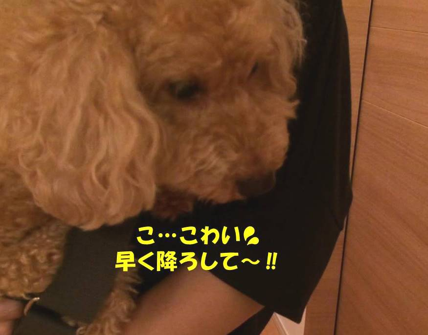f:id:nanachan59:20180831165829j:plain