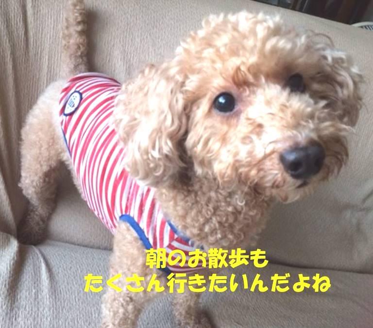 f:id:nanachan59:20180903170530j:plain
