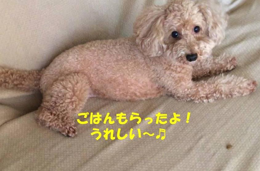 f:id:nanachan59:20180905174740j:plain