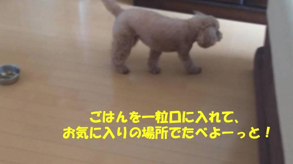f:id:nanachan59:20180905205319j:plain