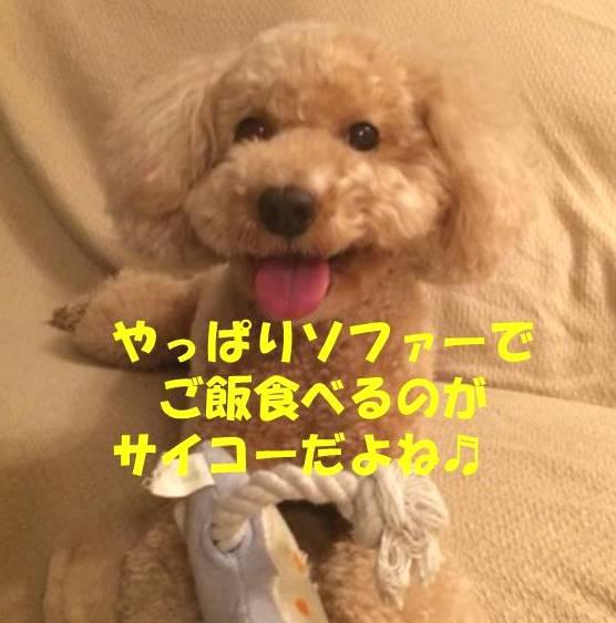 f:id:nanachan59:20180905210802j:plain