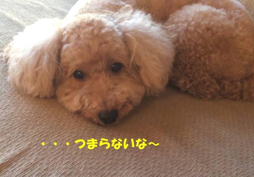 f:id:nanachan59:20180910181214j:plain