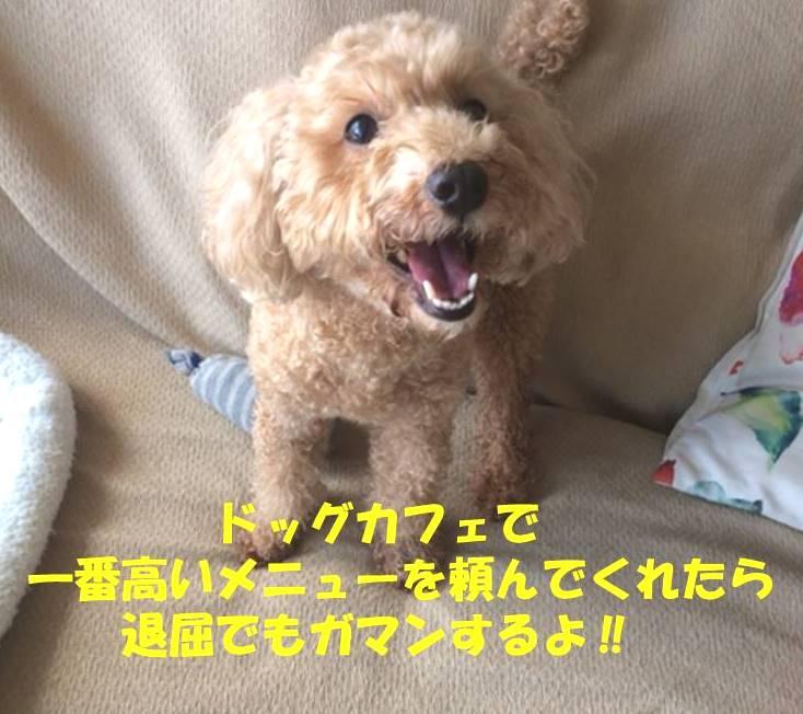 f:id:nanachan59:20180910183637j:plain