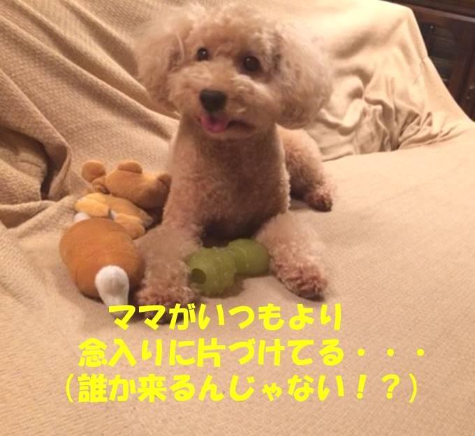 f:id:nanachan59:20180914173139j:plain