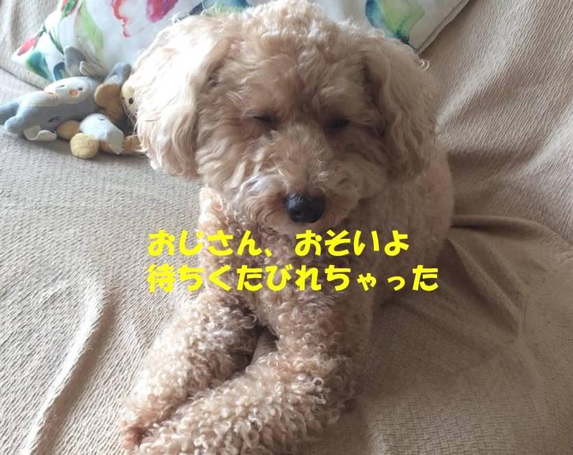 f:id:nanachan59:20180914174106j:plain